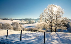 Picture winter, landscape, nature, tree, beauty, morning