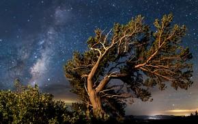 Picture night, tree, pine, starry sky