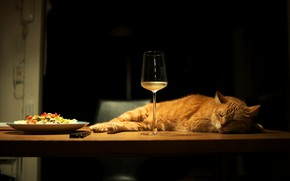 Picture cat, cat, light, pose, table, wine, glass, food, sleep, paws, fluffy, red, plate, refrigerator, chair, …
