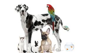 Wallpaper cat, fish, dog, rabbit, parrot, Dalmatians