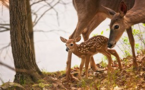 Picture tree, cub, deer, fawn, White-tailed deer