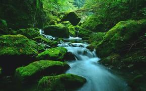 Picture Stream, Forest, Stones, Rapids