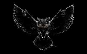 Picture owl, bird, figure, wings, feathers, beak, art, claws, black background