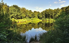 Picture forest, summer, the sun, trees, nature, lake