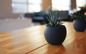 Picture table, plant, pot