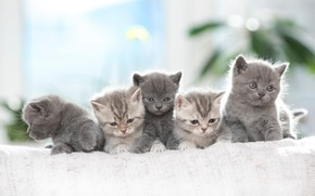 Picture kittens, kids, photoshoot