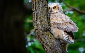 Picture look, tree, owl, bird, trunk, bark, young, bokeh, owl