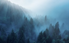 Picture forest, rays, light, trees, nature, fog, morning
