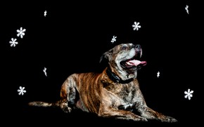 Picture snowflakes, dog, lies, black background