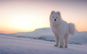 Picture winter, the sky, the sun, light, snow, mountains, nature, dawn, dog, morning, slope, white, face, …