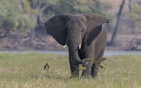 Picture grass, nature, elephant, DUELL ©