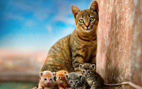 Wallpaper cat, the sky, children, kitty, wall, kittens, kitty, kids, red, grey, mom, blue background, Quartet, ...