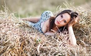 Picture chest, girl, hay, lies, Belavin, Alexander Belavin