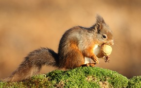Picture pose, background, moss, walnut, protein, meal, walnut