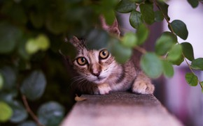 Picture look, leaves, branches, muzzle, kitty, cat