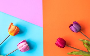 Picture flowers, background, colorful, tulips, flowers, tulips