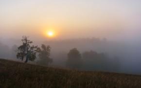 Picture field, forest, summer, grass, the sun, light, trees, landscape, nature, fog, sunrise, dawn, hills, branch, …
