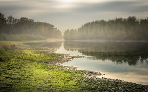 Picture greens, forest, the sky, water, clouds, trees, fog, pebbles, lake, reflection, shore, morning, Austria, haze, …