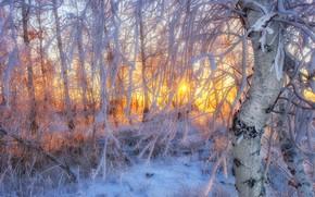 Picture frost, the sun, frost, dervla, Sahaidak Paul
