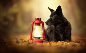 Picture autumn, leaves, dog, lantern, bokeh