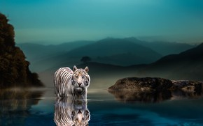 Wallpaper nature, tiger, stones, animal, predator, the evening, pond, Thai Phung