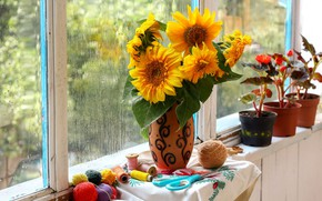 Picture drops, light, sunflowers, flowers, rain, yellow, window, vase, sill, still life, thread, pots, cognize