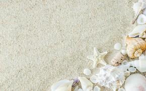 Picture sand, beach, star, shell, summer, beach, sand, marine, starfish, seashells