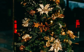 Picture winter, glass, balls, flowers, night, branches, the dark background, holiday, balls, street, toys, Shine, Christmas, …