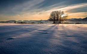 Picture cold, winter, snow, morning