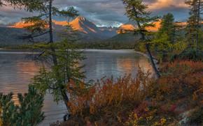 Picture trees, landscape, mountains, nature, dawn, vegetation, morning, the bushes, Vladimir Ryabkov, Kolyma, the lake of …