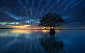 Picture tree, horizon, Bay, glow
