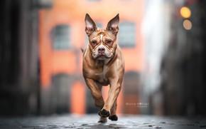 Picture face, street, dog, walk, bokeh