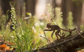 Picture grass, light, flowers, nature, pose, tree, monkey, log, cub, monkey, stand, bokeh, monkey