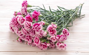 Picture flowers, pink, wood, pink, carnation, flowers