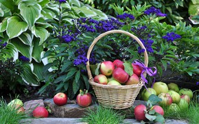 Picture flowers, apples, harvest, basket