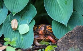 Picture look, leaves, drops, nature, turtle, orange, face, bug, Peeps, host, land