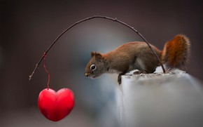 Picture animal, branch, protein, heart, curiosity, animal, rodent