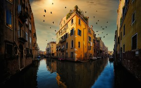 Picture birds, the city, home, Italy, Venice, channel