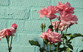 Picture flowers, wall, roses, 2018, Meduzanol ©