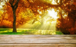 Picture autumn, leaves, trees, Park, forest, nature, wood, park, autumn, leaves, tree, sunlight