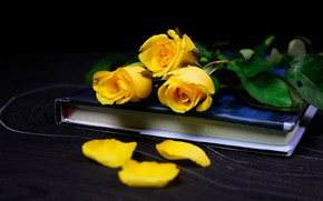 Picture flowers, rose, roses, bouquet, yellow, petals, book, black background