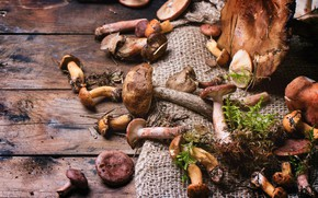 Picture mushrooms, Board, a lot, different, burlap, production of mushroom, edible