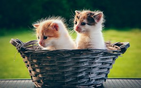 Picture basket, kittens, kids