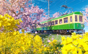 Picture train, spring, flowering