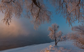 Picture winter, frost, snow, trees, morning, frost, Russia, Khakassia, Alexander Makeev