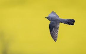 Picture background, bird, flight