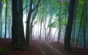 Picture road, forest, light, trees, nature, fog, morning