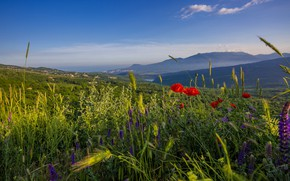 Picture greens, summer, the sky, flowers, mountains, blue, hills, Maki, meadow, red