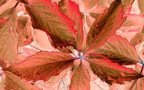 Picture color, fantasy, leaf