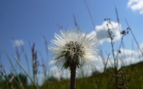 Picture macro, flowers, Nature, Belarus, my photo